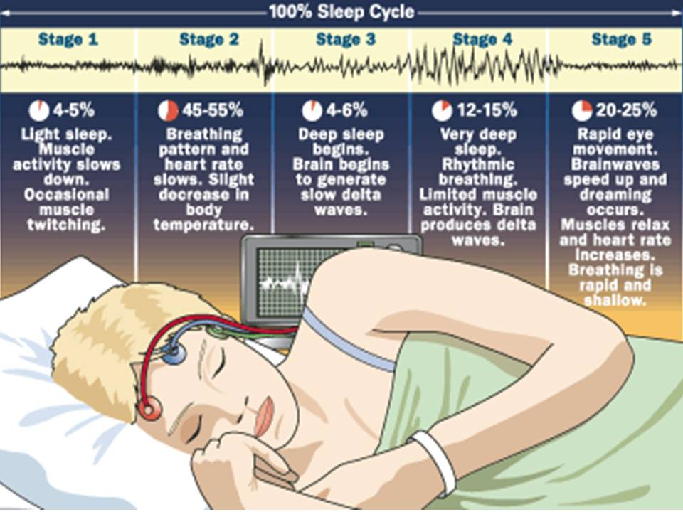 origins and functions of dreams and rem sleep